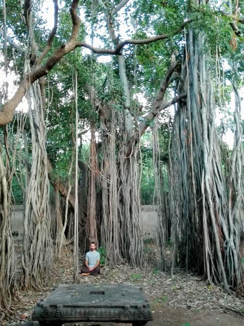Sob uma banyan tree do Ramana Ashram, Índia (2017)